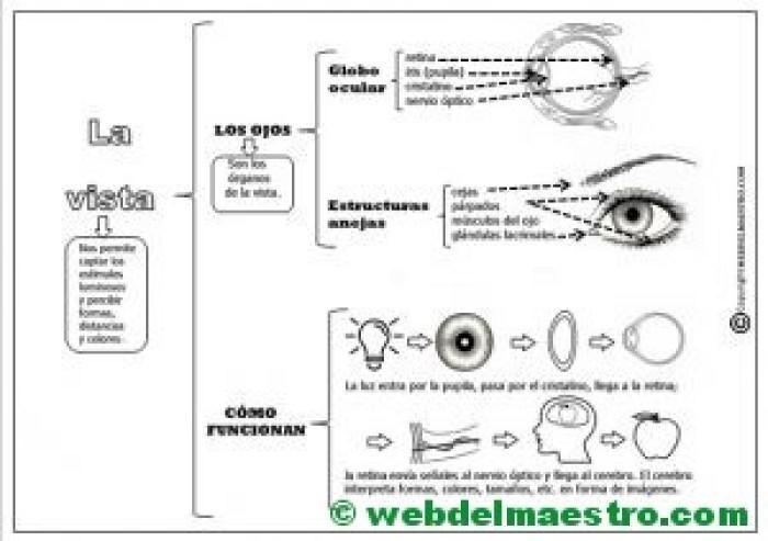 El sentido de la vista - Resumen mapa conceptual