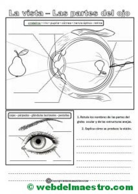 El sentido de la vista-actividades de refuerzo
