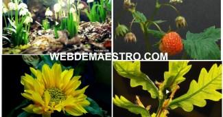 Como crecen las plantas-III