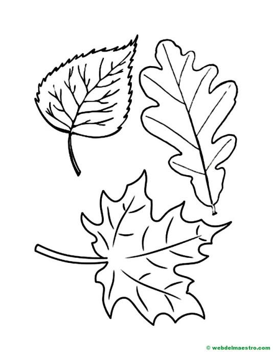 hojas otoño colorear-
