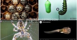 La metamorfosis - Vídeos educativos para niños de Primaria