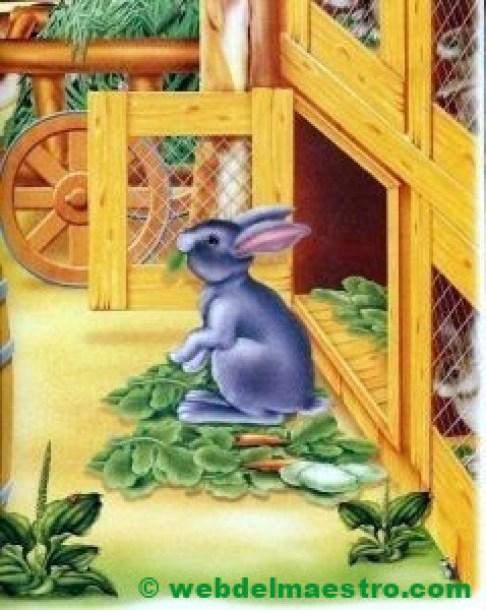 Conejo en su conejera
