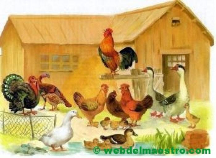 Corral con aves domésticas
