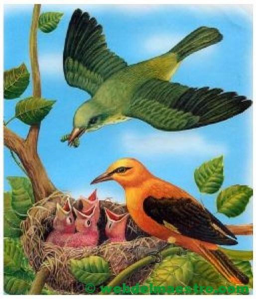 Pájaros alimentando a sus crías