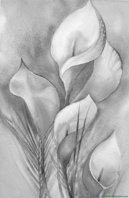 calas-dibujo de flores a lápiz
