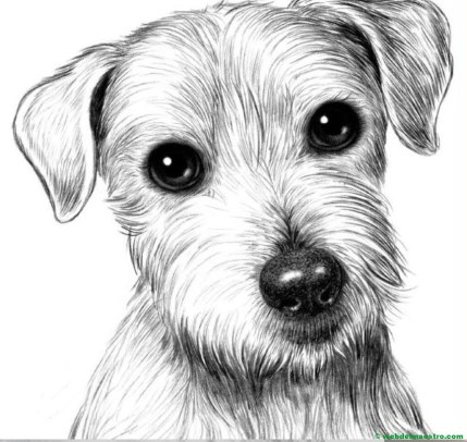 dibujo de perrito a lapiz
