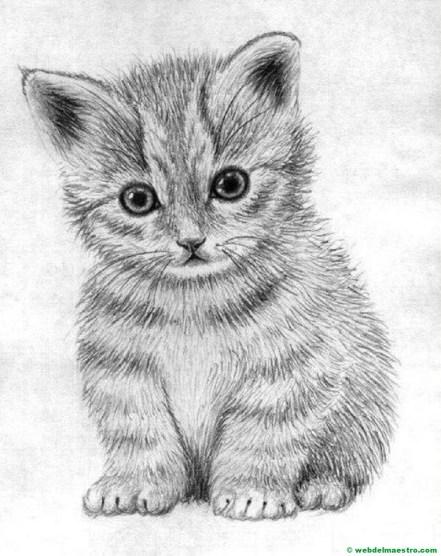 gatito dibujado a lápiz