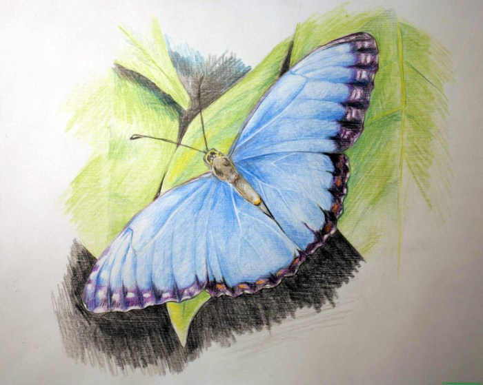 dibujo de mariposa a lápiz de color