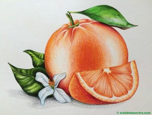dibujo de naranja a lápiz de color-