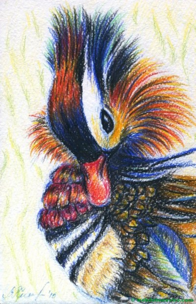 dibujo de pato a lápiz de color