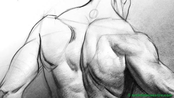 dibujo de torso humano