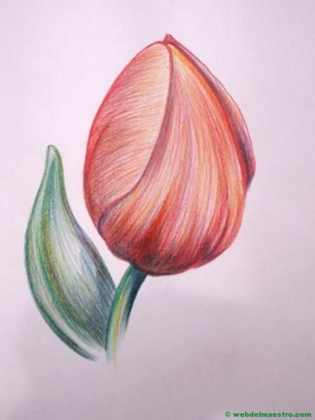 dibujo de tulipán a lápiz de color