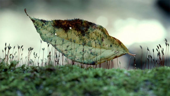 Leaf on the grass