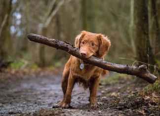 Hund mit Stock auf Augenhöhe