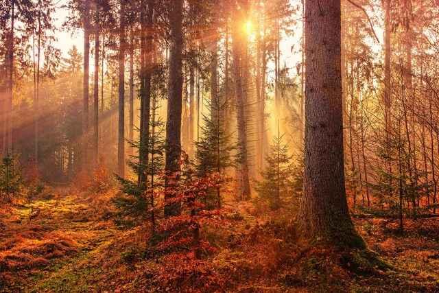 Herbstliche Farben fotografieren