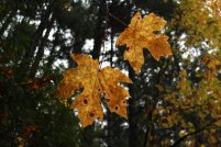 Fall hiking.