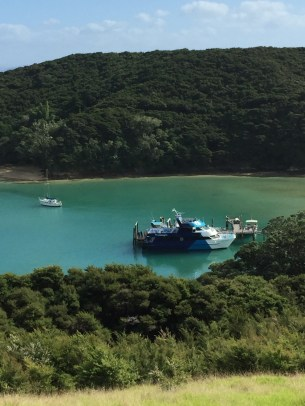 Bay of Islands Cruises