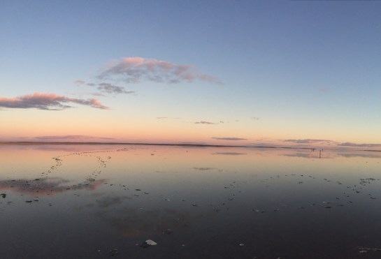 lake tyrrell wildife reserve