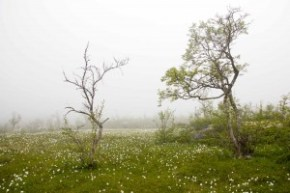 Hardangervidda – Wanderung von Hjølmaberget nach Viveli