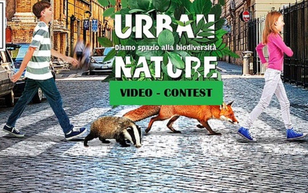 Urban Nature Concorso Video