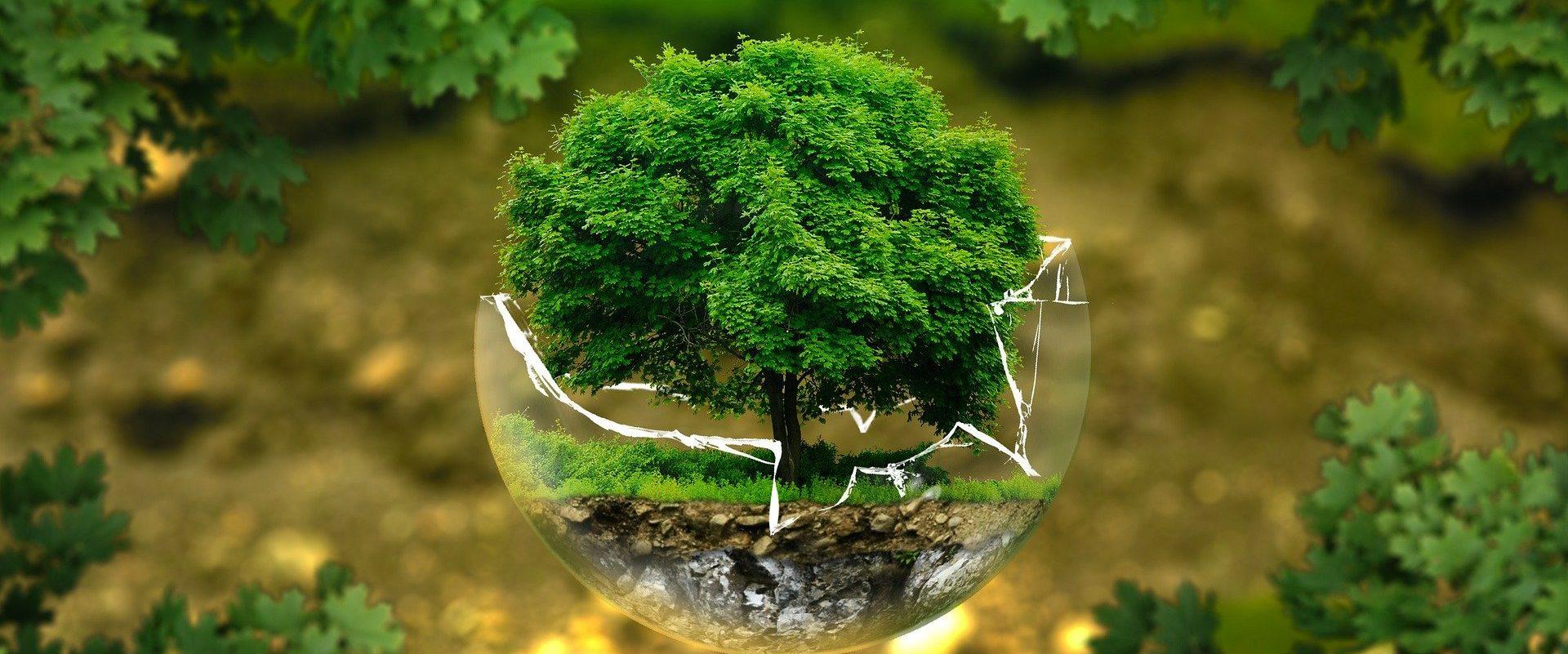Ecosia: raggiunti i 100 milioni di alberi!