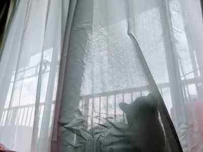 ニトリの花粉キャッチレースカーテンを購入!