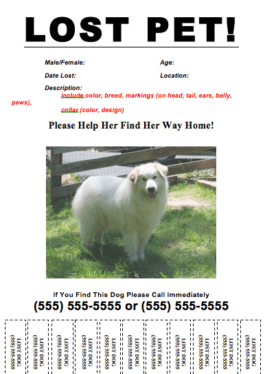 Lost Template. missing posters template lost pet poster template ...
