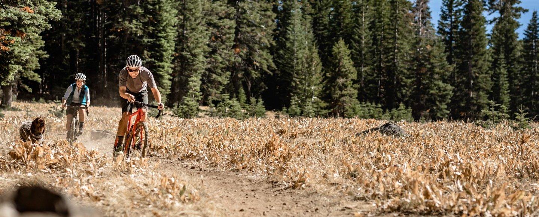 Wilderness Trail Bikes