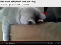 倒れこんだ猫が可愛い!疲れているのかな?