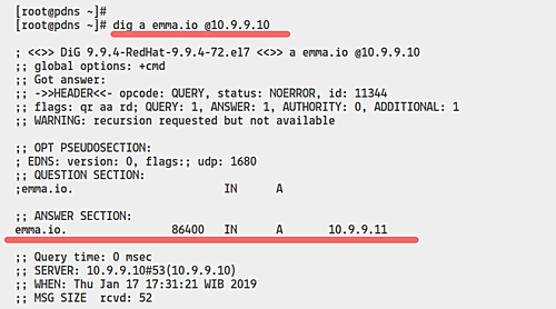 dig command result