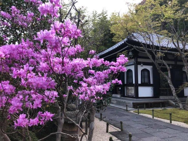 idée originale animation visioconférence printemps japonais