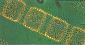 planktongroep