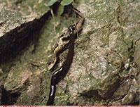 platworm wormen
