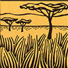 pademelon-kangoeroe-zoogdier-savanne-woongebied