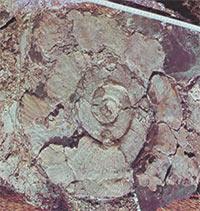 fossiele slakken