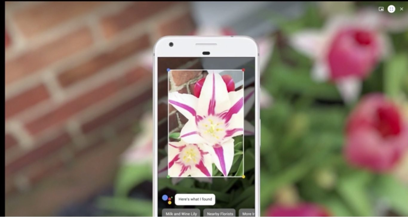 demo given at google io where google lens is describing knowledge about a flower