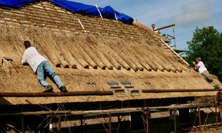 Regionaal riet op daken van Overijsselse boerderijen