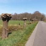 Bomen Klaas Kloosterweg West voelen zich behoorlijk beknot