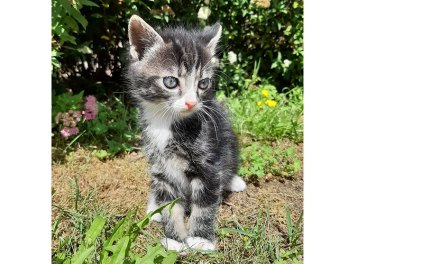 Nog een kitten zoek, wie weet waar deze is? (Update)