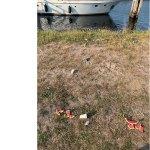 Dikke bende bij kanaal blauwe brug