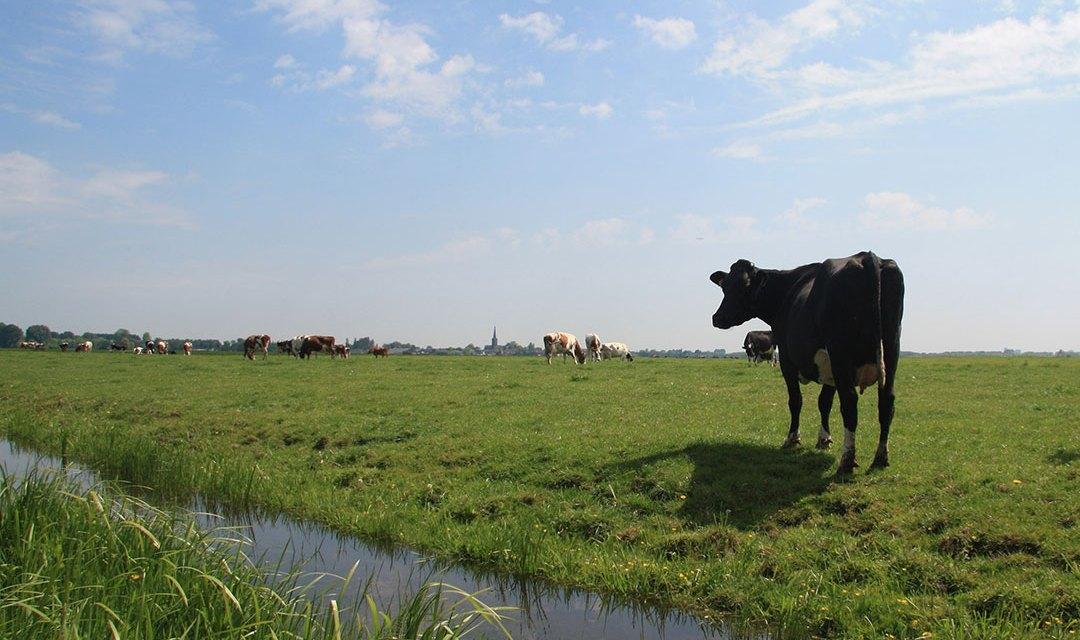 Kansen voor boeren op veengronden in Staphorst