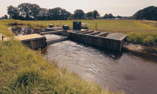 Update droogte: grondwaterstanden herstellen verder dankzij buien