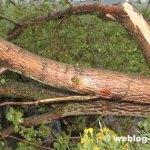 Gratis inleveren grof tuinafval