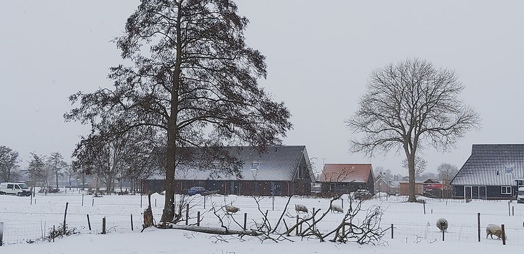 Sneeuwfoto's door Jenine Hofstede