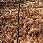 Wederom een bijzondere boom in het Staphorster bos