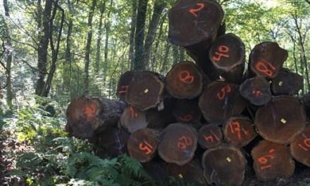 Provincie Overijssel stopt voorlopig met ondersteuning projecten houtige biomassa