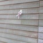 Knuffel gevonden bij bosvijver Staphorst