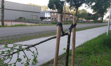 Noodweer(?) vernield boompjes aan duurste fietspad van de gemeente.