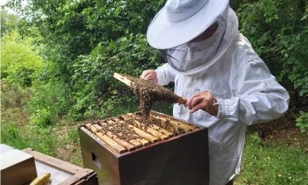 Wandeling 'De honingbij'