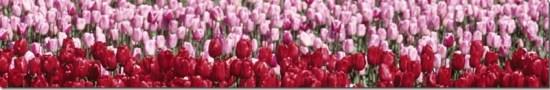 banner_sierteelt_bloemen